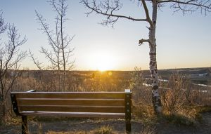 Park Bench and Aspen Trees at Sunset
